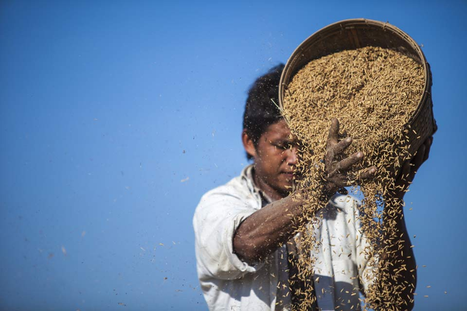 winnowing-rice-mrauk-u-myanmar